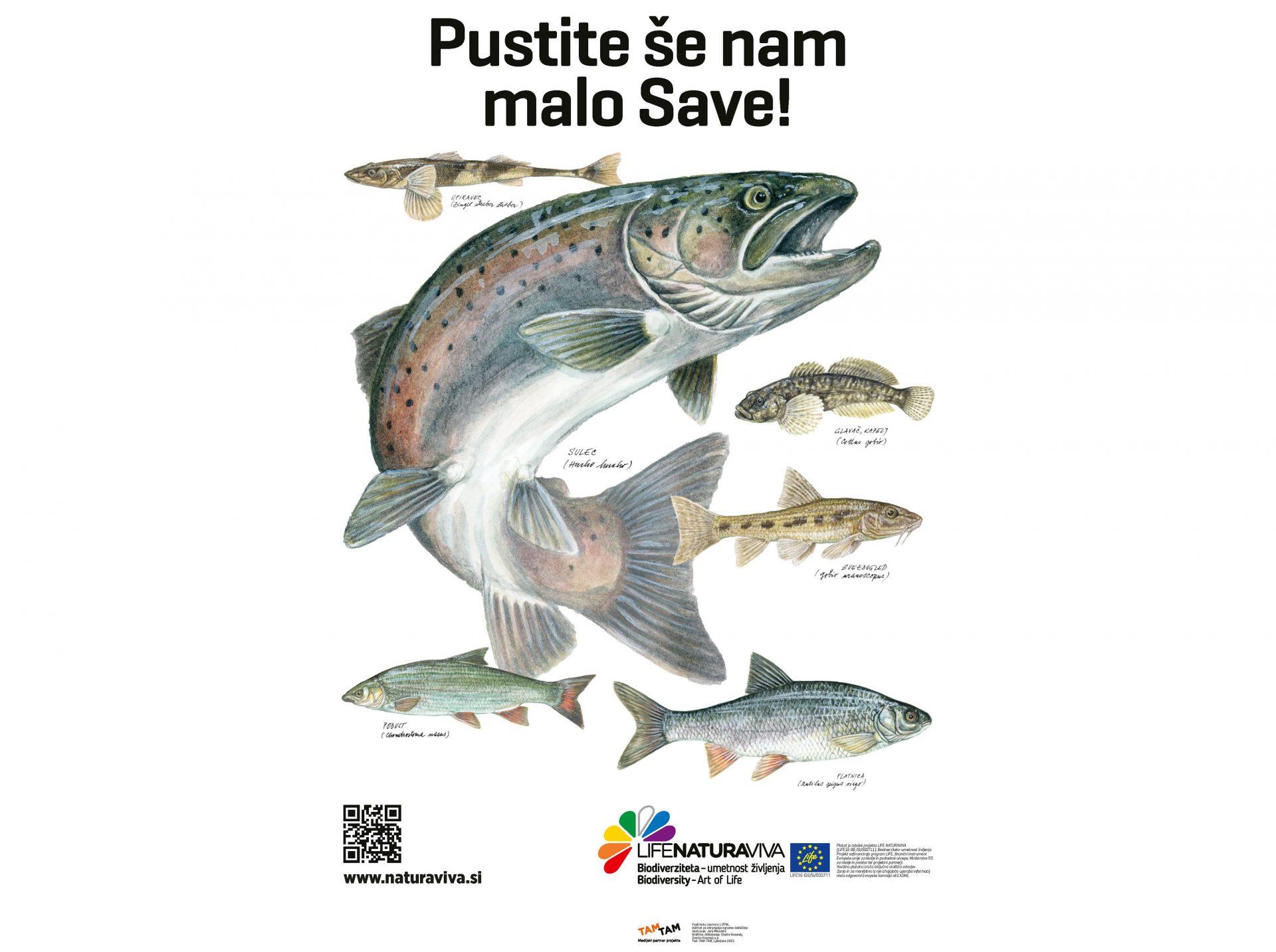 Flyfishing with Flyfishingodec Slovenia